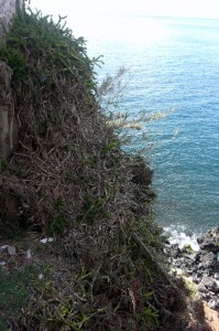 This is height of cemetery down to the sea.